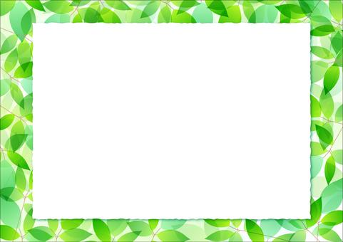 Fresh green material 19