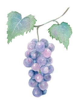 Draw with transparent watercolor with grape leaf