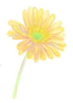 Gerbera (yellow)