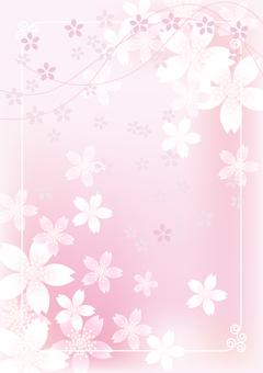 Sakura & Sakura 12