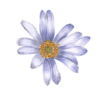 Flower 10 - Murasaki flower