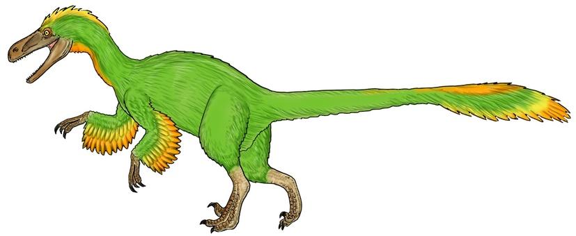 Feathered Dinosaur Fukui Venator