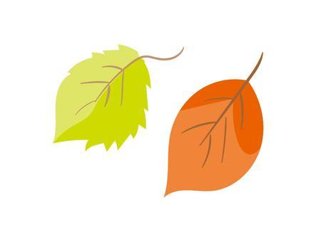 Dead leaves / fallen leaves