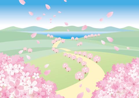 봄 풍경 벚꽃 9