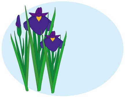 Flower - iris (shoumu) -15