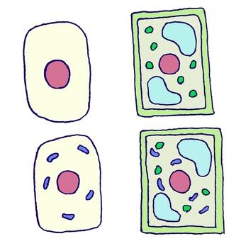 植物细胞和动物细胞