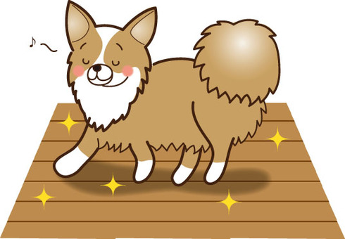 Chihuahua 02