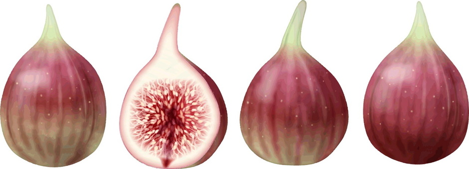 Fig / 2