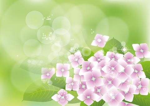 Green & hydrangea 1