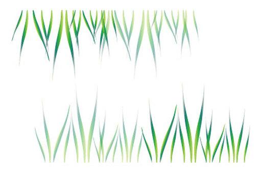 Cool green waterside grass