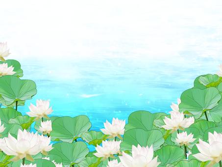 연꽃의 배경