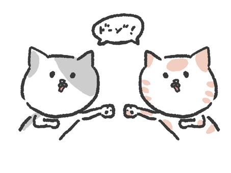 고양이 14