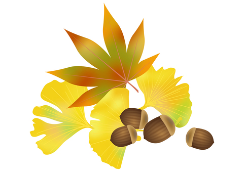 Accor and autumn leaves ginkgo 4