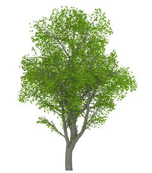 Trees _0002_03
