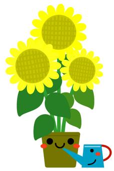 Sunflower and Jouro