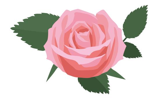玫瑰(單質)