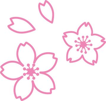 Cherry flower drawing