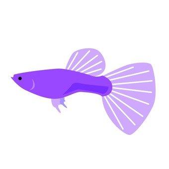 Aquarium fish 3