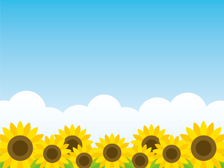 Sunflower field and cloud background material