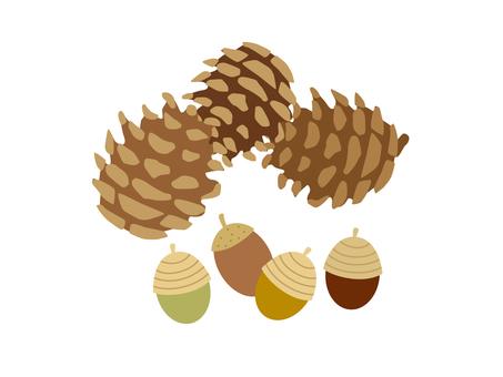 Pine cones and acorn