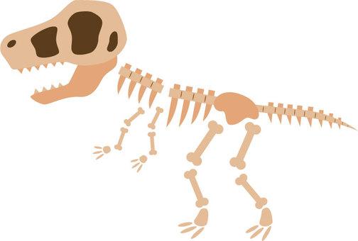 Fossil of Tyrannosaurus
