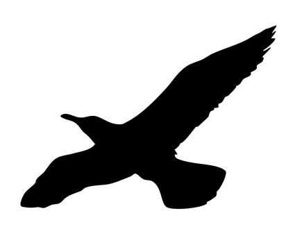 Seagull (Silhouette)