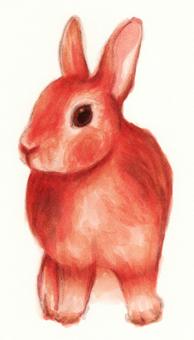 Rabbit Chaco