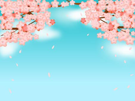 櫻花(藍天)