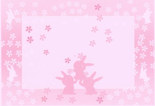 벚꽃 토끼