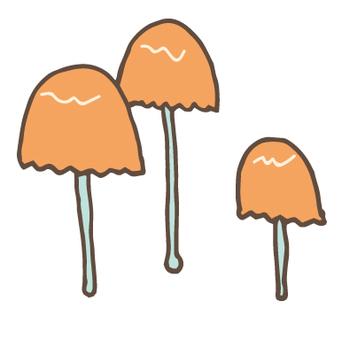 버섯 -60