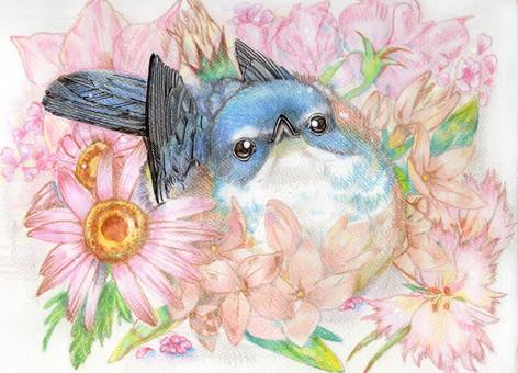 Blue bird and pink flower