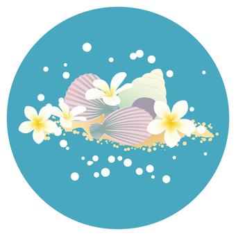 貝類和雞蛋花