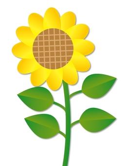 Sunflower 01