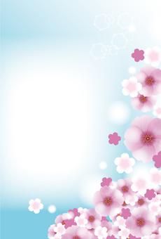분홍색 벚꽃 만개의 엽서