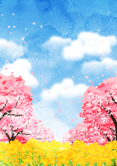 Watercolor style cherry blossoms row and rape field background