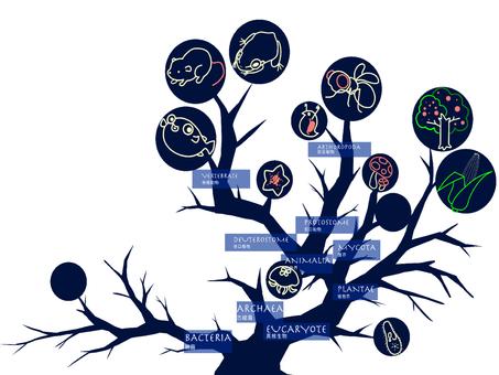 系統發育樹(有生命的東西)