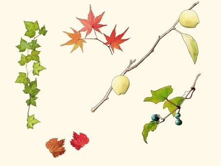 Fresh Autumn ② Classic