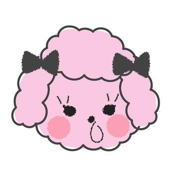 Fashionable poodle