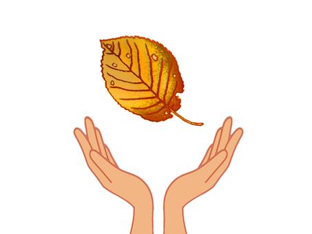 손바닥에 낙엽지는
