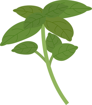 Food series vegetable basil