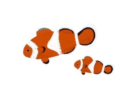 Clownfish parent and child
