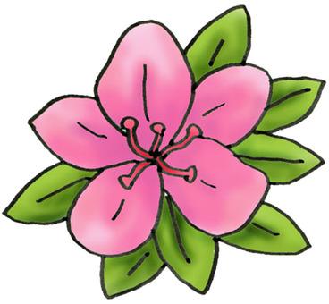 Azalea flower 1