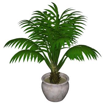 관엽 식물 05