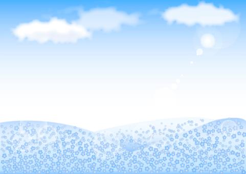 Nemophila background