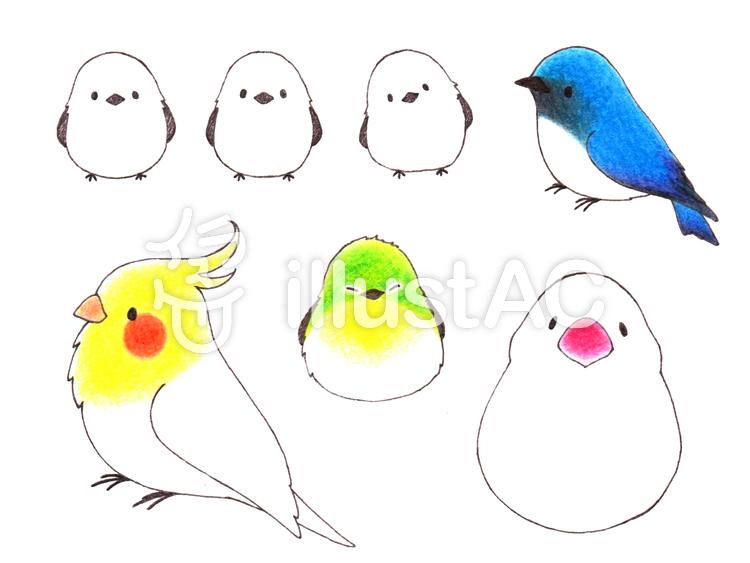 鳥の手描きイラストまとめ