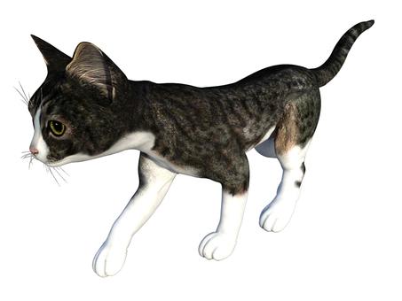 歩く子猫(トラ猫/グレイ)