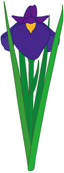 Flower - iris (shoumu) -13