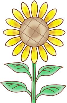 JM plant sunflower 2 without face