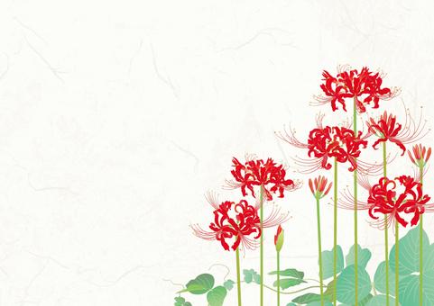 종이 배경 _ 피안 꽃