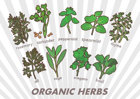 Organic herbs set 3